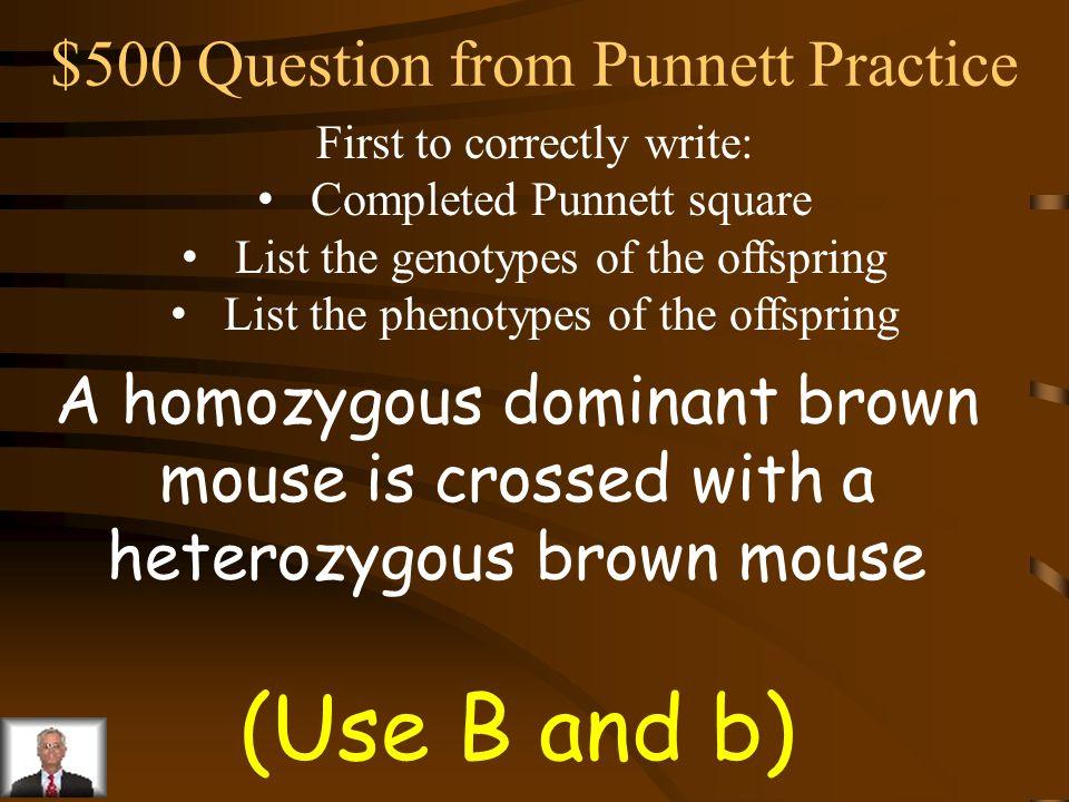 $400 Answer from Punnett Practice Rr R r RR rr Rr Genotypes: RR 1: Rr 2: rr 1 Phenotypes: Red 3: White 1