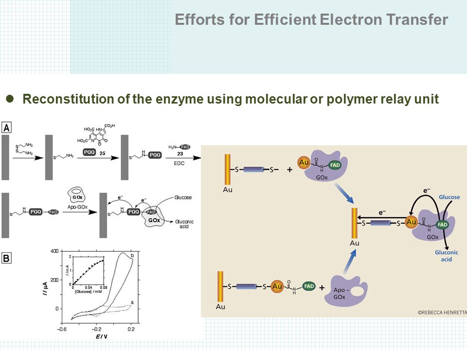 Efforts for Efficient Electron Transfer Reconstitution of the enzyme using molecular or polymer relay unit