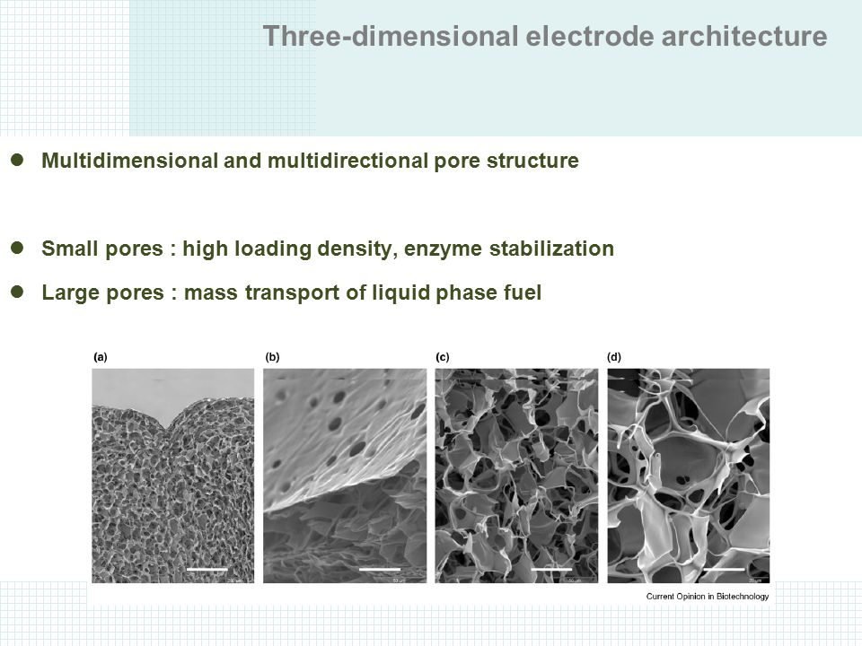 Three-dimensional electrode architecture Multidimensional and multidirectional pore structure Small pores : high loading density, enzyme stabilization