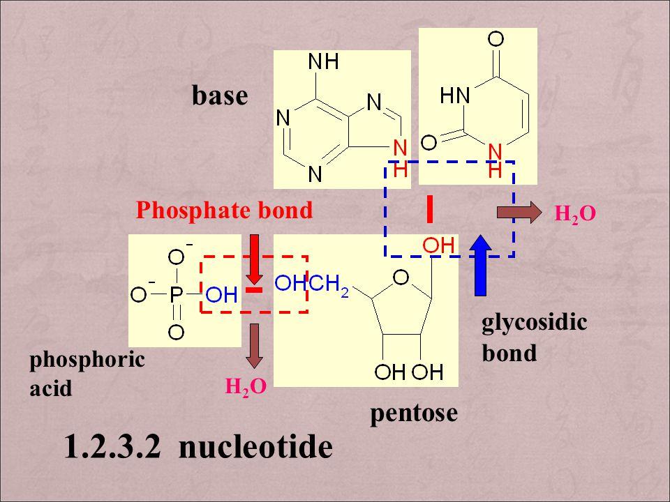 H2OH2O H2OH2O base phosphoric acid pentose glycosidic bond Phosphate bond 1.2.3.2 nucleotide