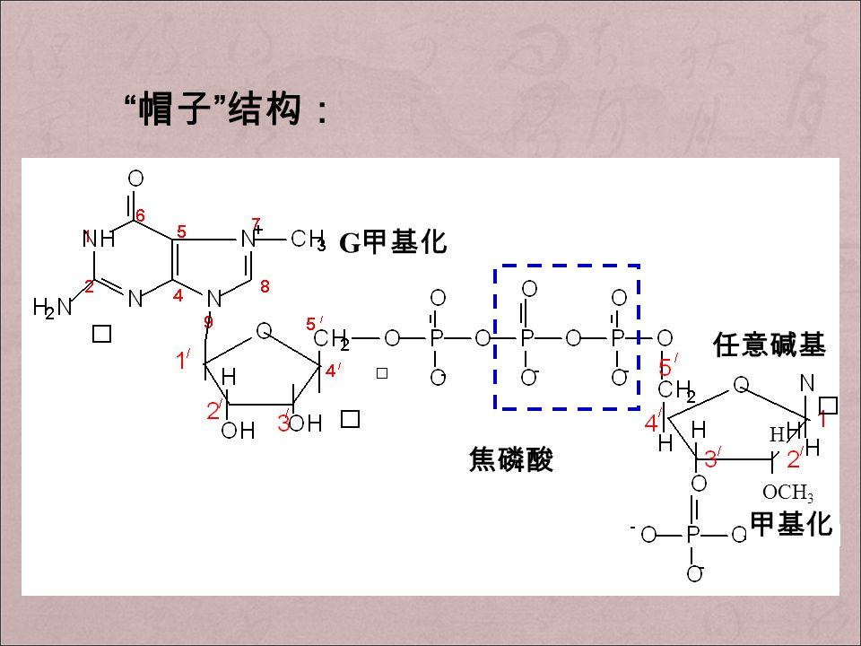 帽子 结构: G 甲基化 焦磷酸 OCH 3 甲基化 H 任意碱基
