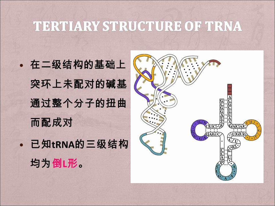 在二级结构的基础上, 突环上未配对的碱基 通过整个分子的扭曲 而配成对 已知 tRNA 的三级结构 均为倒 L 形。