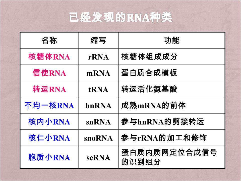 名称缩写功能 核糖体 RNA rRNA 核糖体组成成分 信使 RNA mRNA 蛋白质合成模板 转运 RNA tRNA 转运活化氨基酸 不均一核 RNA hnRNA 成熟 mRNA 的前体 核内小 RNA snRNA 参与 hnRNA 的剪接转运 核仁小 RNA snoRNA 参与 rRNA 的加工和修饰 胞质小 RNA scRNA 蛋白质内质网定位合成信号 的识别组分