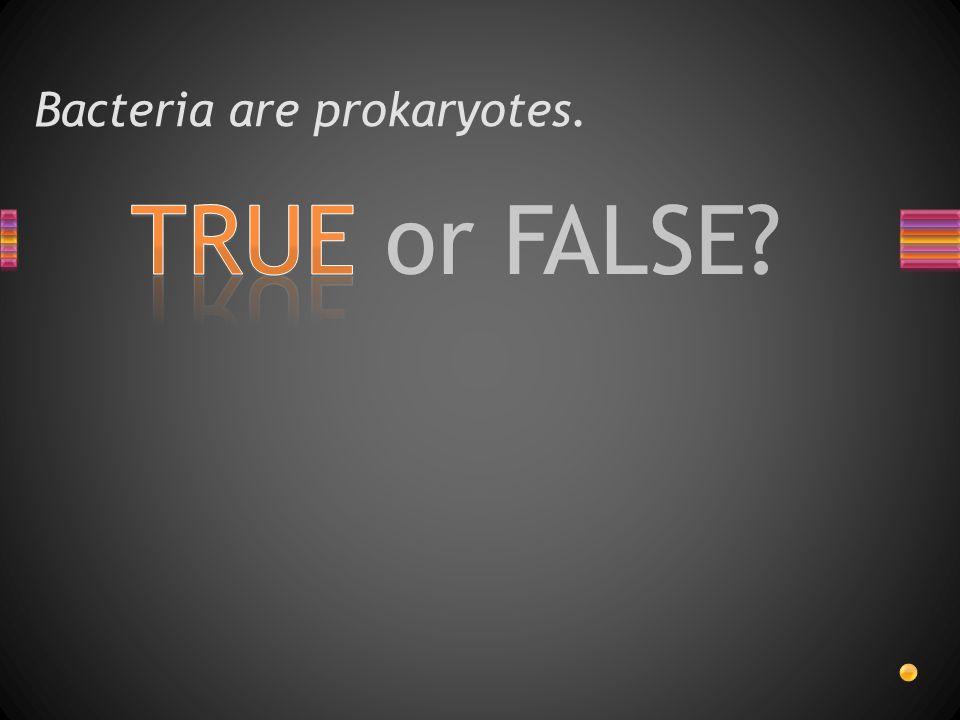 TRUE or FALSE? Bacteria are prokaryotes.