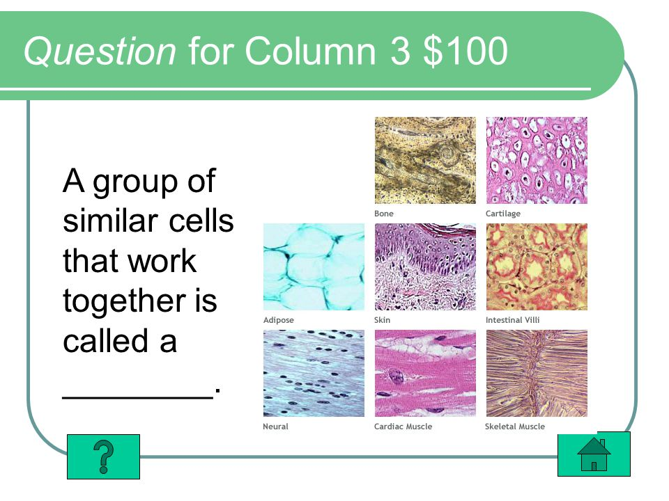 Question for Column 3 $100 A group of similar cells that work together is called a ________.