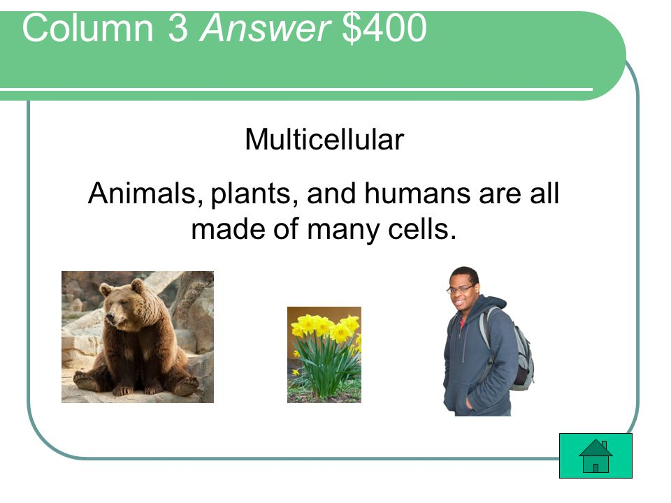 Column 3 Answer $400 Multicellular Animals, plants, and humans are all made of many cells.