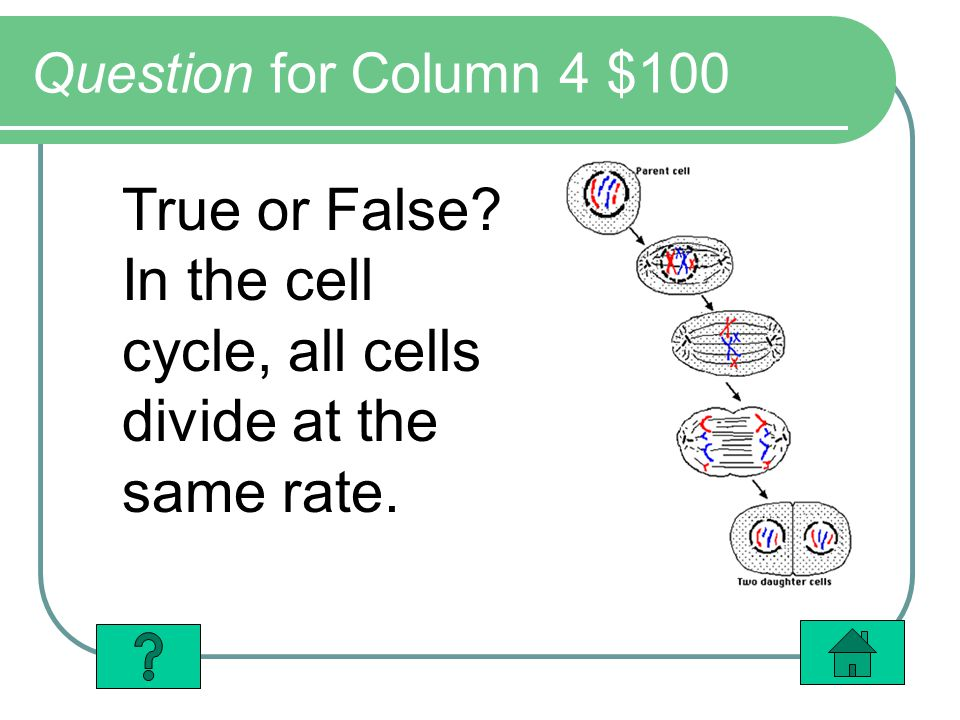 Question for Column 4 $100 True or False In the cell cycle, all cells divide at the same rate.