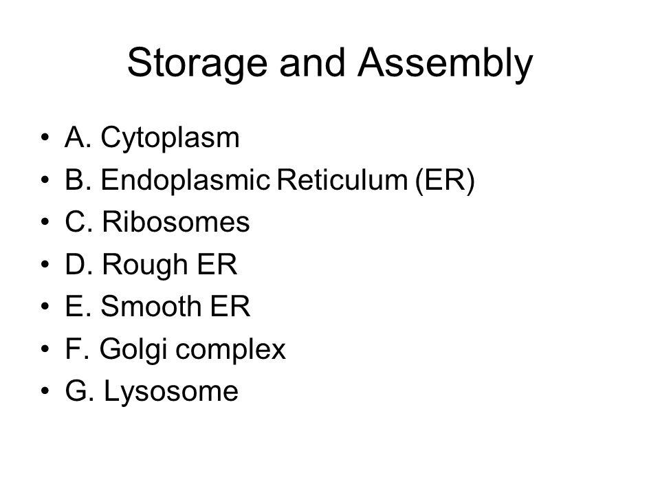 Storage and Assembly A. Cytoplasm B. Endoplasmic Reticulum (ER) C. Ribosomes D. Rough ER E. Smooth ER F. Golgi complex G. Lysosome