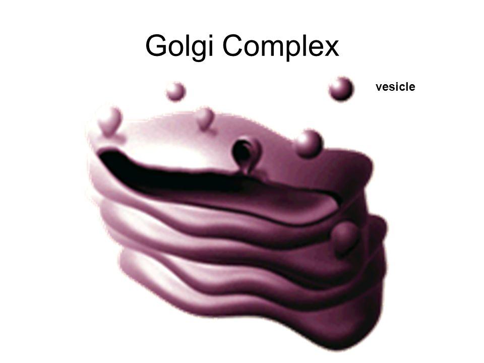 Golgi Complex vesicle