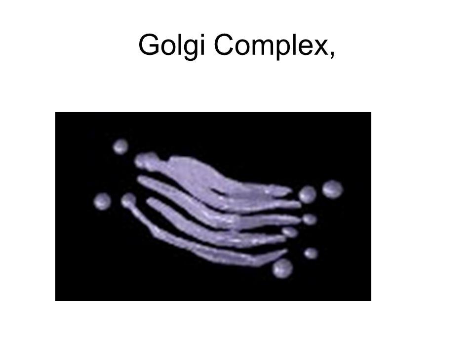 Golgi Complex,