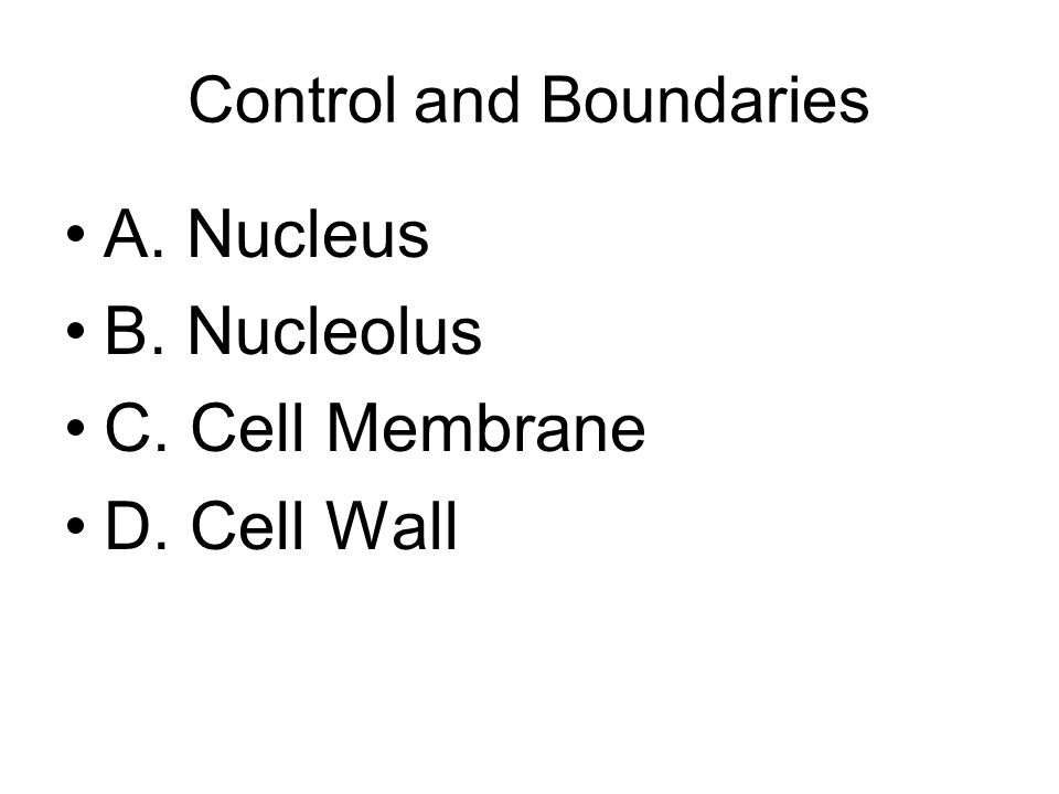 Control and Boundaries A. Nucleus B. Nucleolus C. Cell Membrane D. Cell Wall