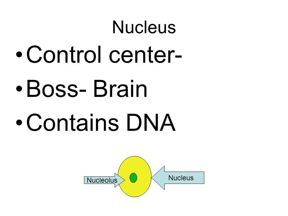 Nucleus Control center- Boss- Brain Contains DNA Nucleus Nucleolus