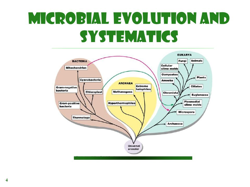 MICROBIAL EVOLUTION AND SYSTEMATICS 4 ADVANCE MICROBIOLOGY