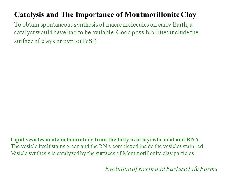 Catalysis and The Importance of Montmorillonite Clay To obtain spontaneous synthesis of macromolecules on early Earth, a catalyst would have had to be