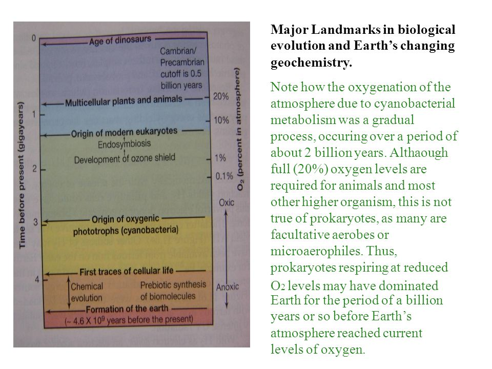 Major Landmarks in biological evolution and Earth's changing geochemistry.