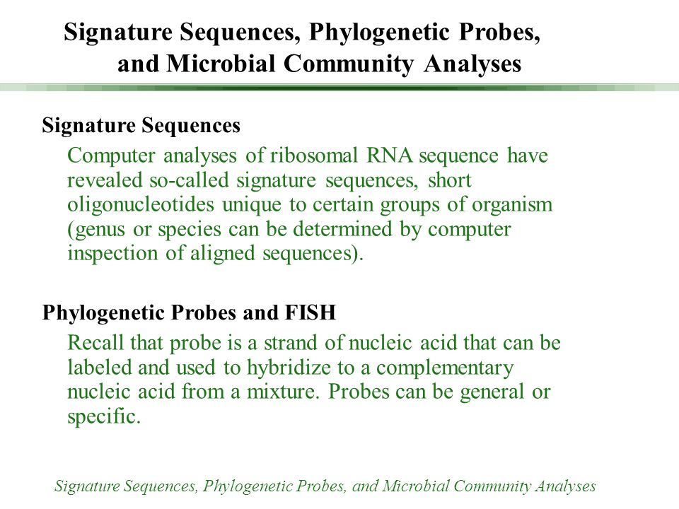 Signature Sequences Computer analyses of ribosomal RNA sequence have revealed so-called signature sequences, short oligonucleotides unique to certain