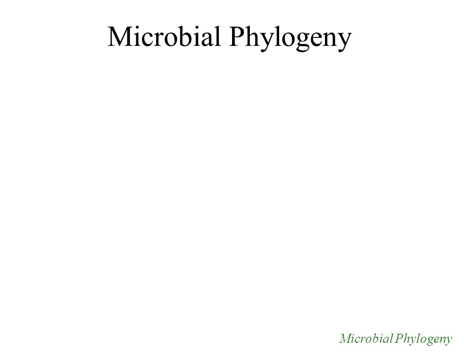 Microbial Phylogeny
