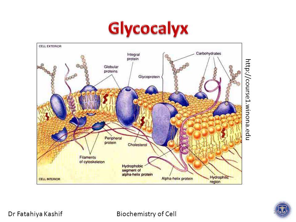 Biochemistry of CellDr Fatahiya Kashif 29 http://course1.winona.edu