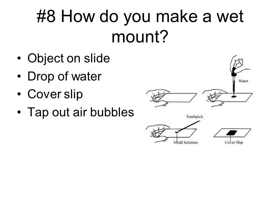 #8 How do you make a wet mount Object on slide Drop of water Cover slip Tap out air bubbles