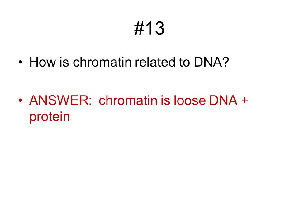 #13 How is chromatin related to DNA ANSWER: chromatin is loose DNA + protein