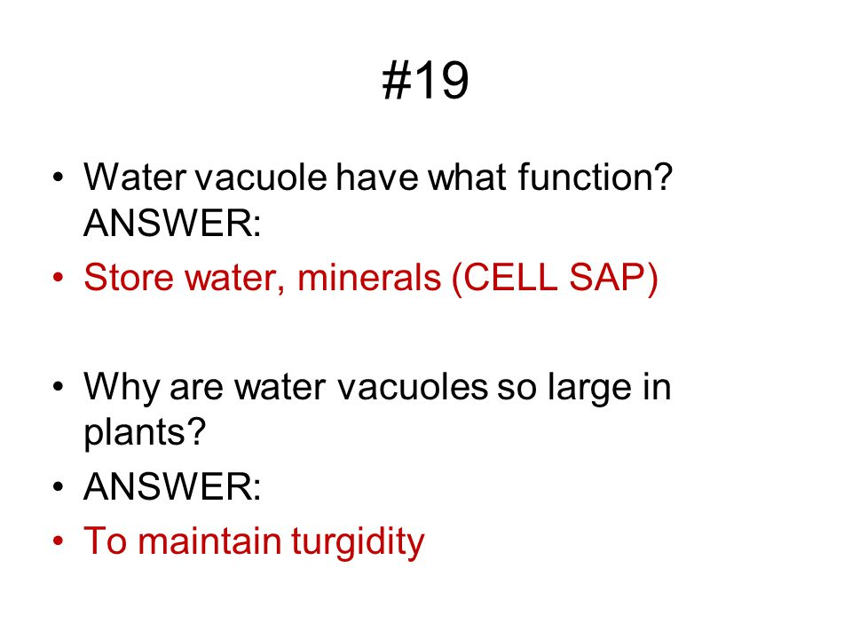 #19 Water vacuole have what function.