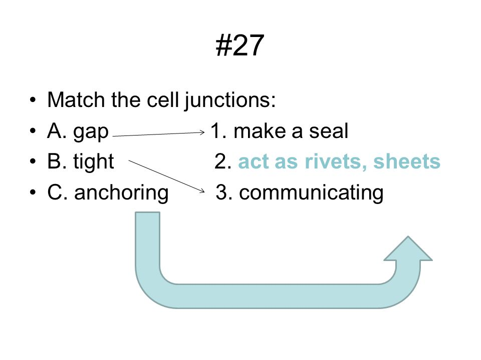 #27 Match the cell junctions: A. gap 1. make a seal B.