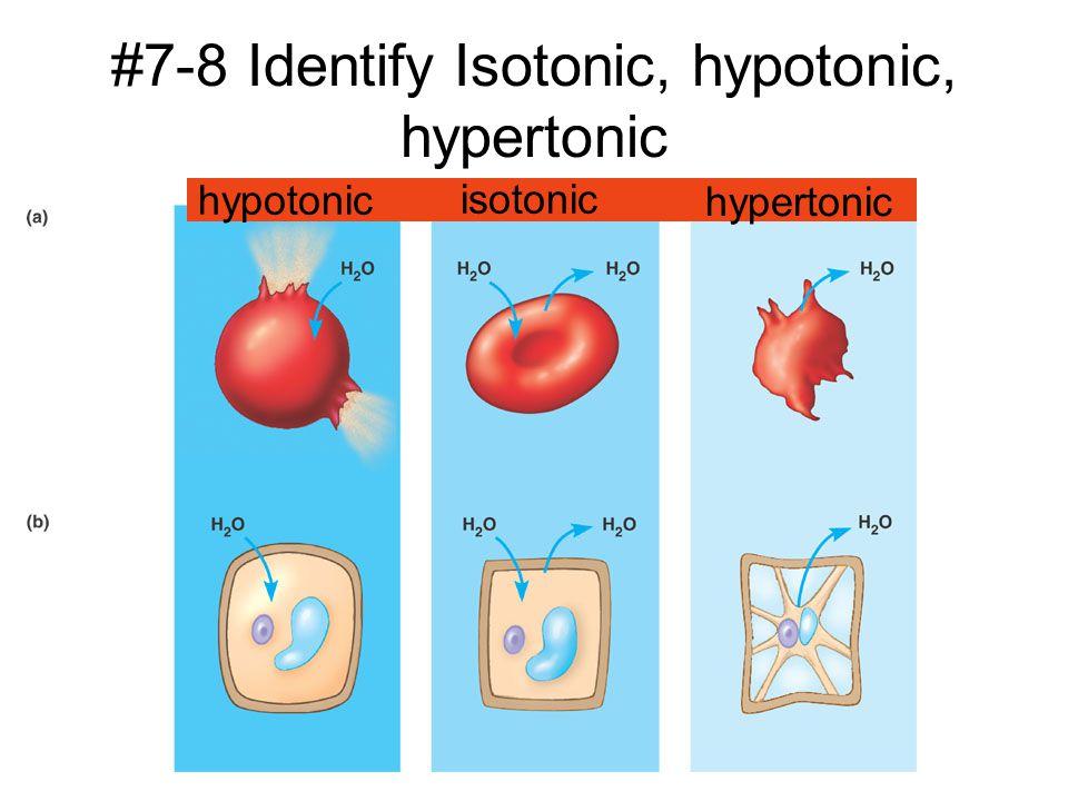 hypotonic isotonic hypertonic