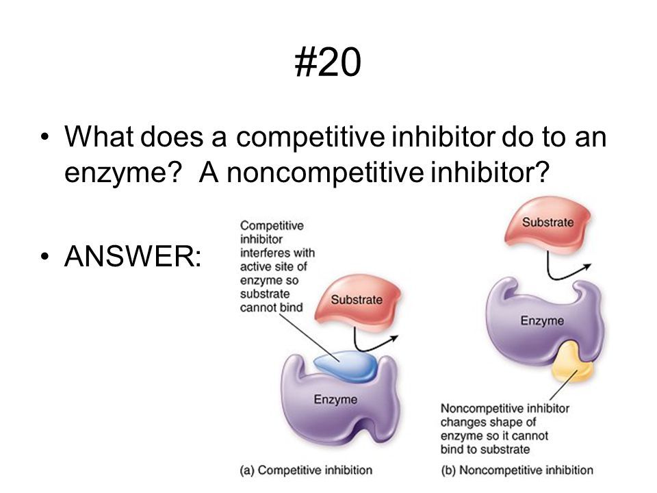 #20 What does a competitive inhibitor do to an enzyme A noncompetitive inhibitor ANSWER: