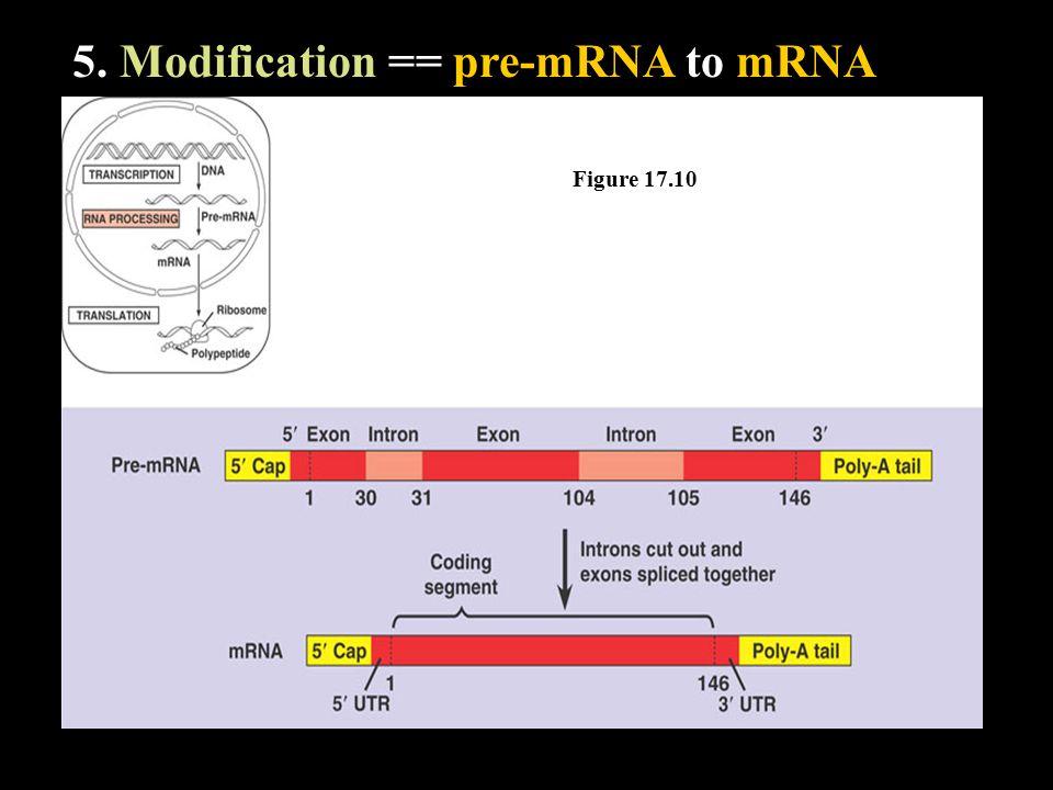 5. Modification == pre-mRNA to mRNA Figure 17.10