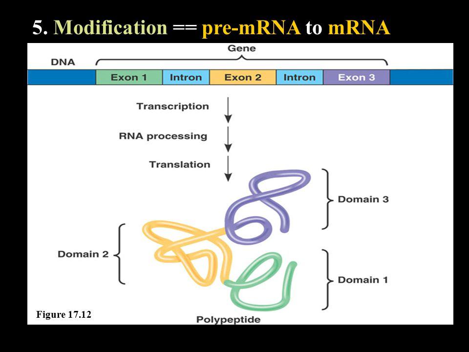 5. Modification == pre-mRNA to mRNA Figure 17.12
