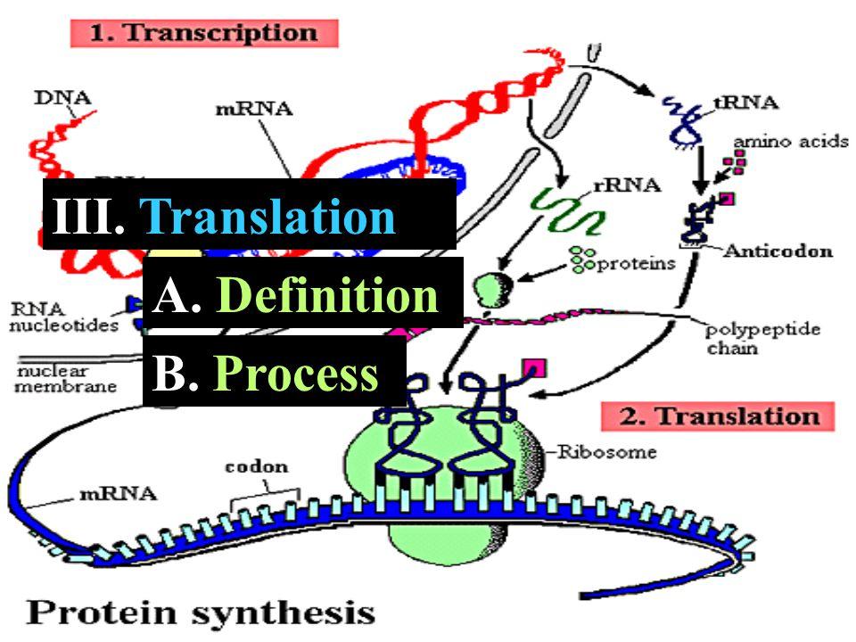 III. Translation A. A. Definition B. B. Process