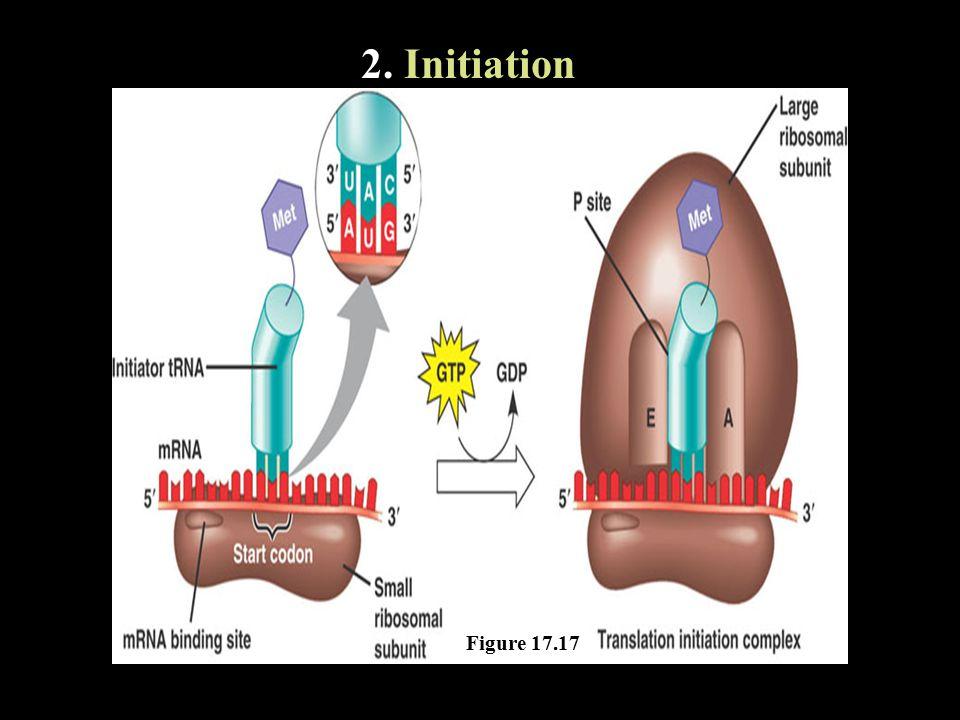2. Initiation Figure 17.17
