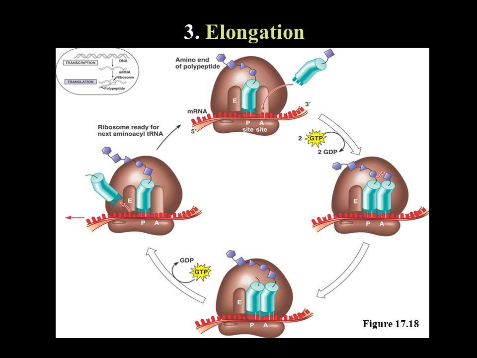 3. Elongation Figure 17.18