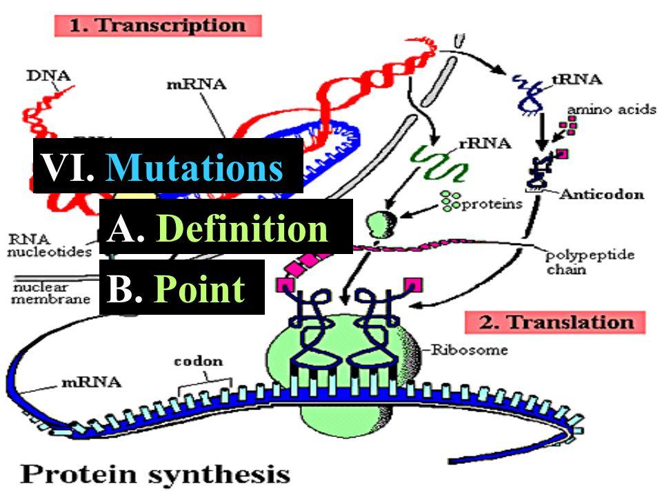 VI. Mutations A. A. Definition B. B. Point