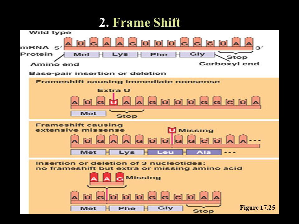2. Frame Shift Figure 17.25