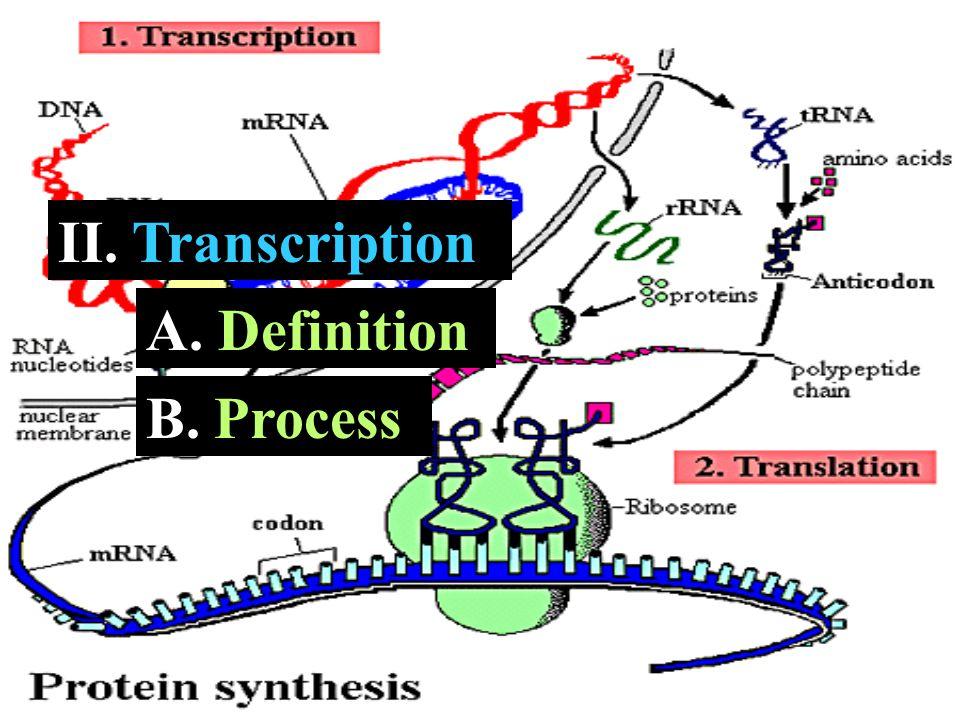 II. Transcription A. A. Definition B. B. Process