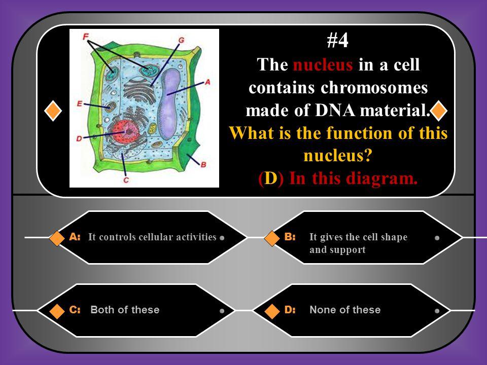 C. Cells
