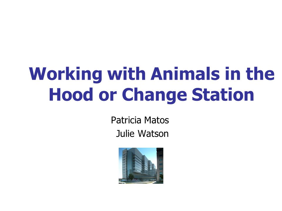 Working with Animals in the Hood or Change Station Patricia Matos Julie Watson