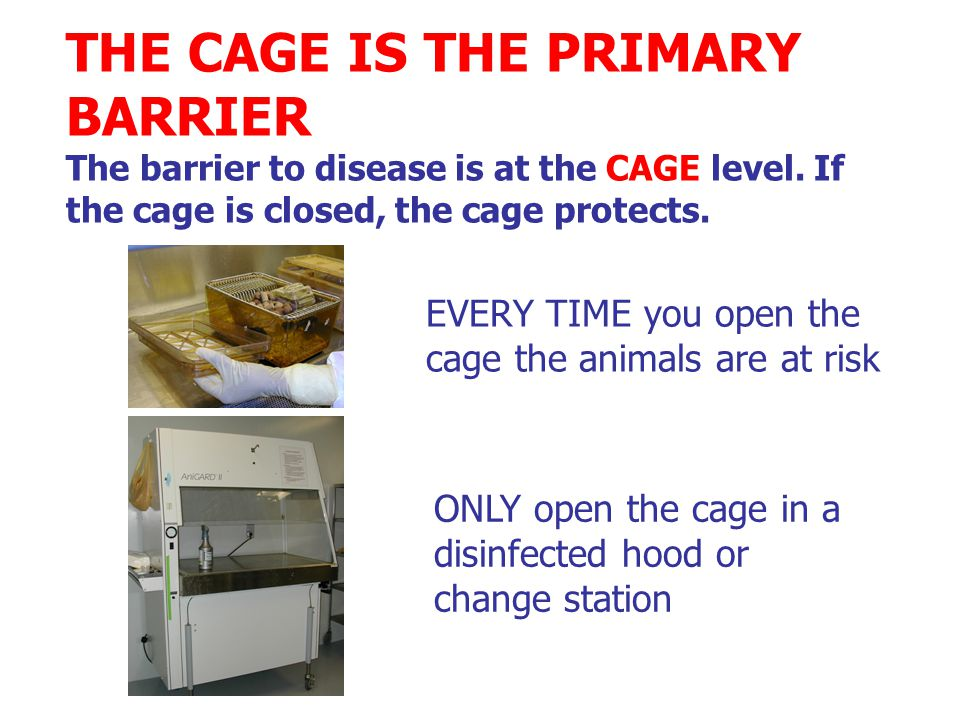 EVERY TIME you open the cage the animals are at risk ONLY open the cage in a disinfected hood or change station THE CAGE IS THE PRIMARY BARRIER The barrier to disease is at the CAGE level.