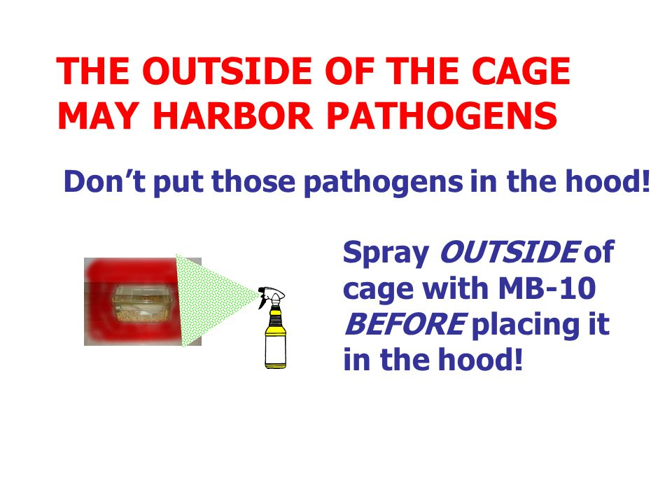 THE OUTSIDE OF THE CAGE MAY HARBOR PATHOGENS Spray OUTSIDE of cage with MB-10 BEFORE placing it in the hood.