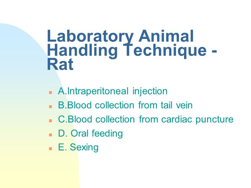 Laboratory Animal Handling Technique - Rat n A.Intraperitoneal injection n B.Blood collection from tail vein n C.Blood collection from cardiac punctur