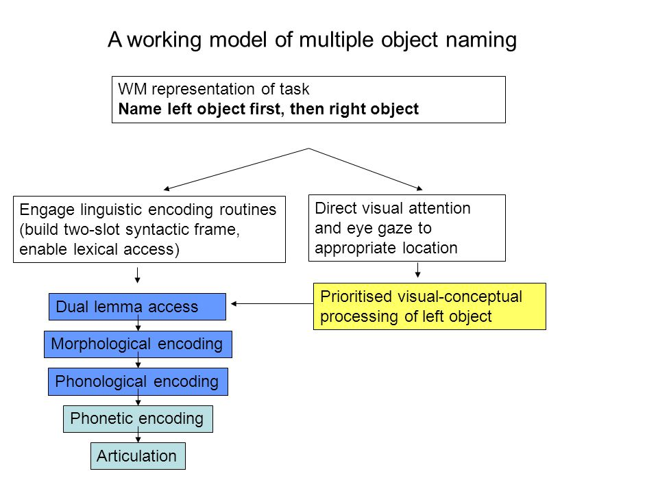 Prioritised visual-conceptual processing of left object Dual lemma access Morphological encoding Phonological encoding Phonetic encoding Articulation Direct visual attention and eye gaze to appropriate location WM representation of task Name left object first, then right object Engage linguistic encoding routines (build two-slot syntactic frame, enable lexical access) A working model of multiple object naming