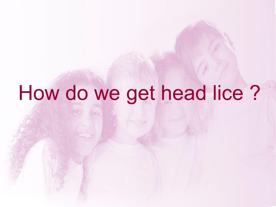 How do we get head lice ?