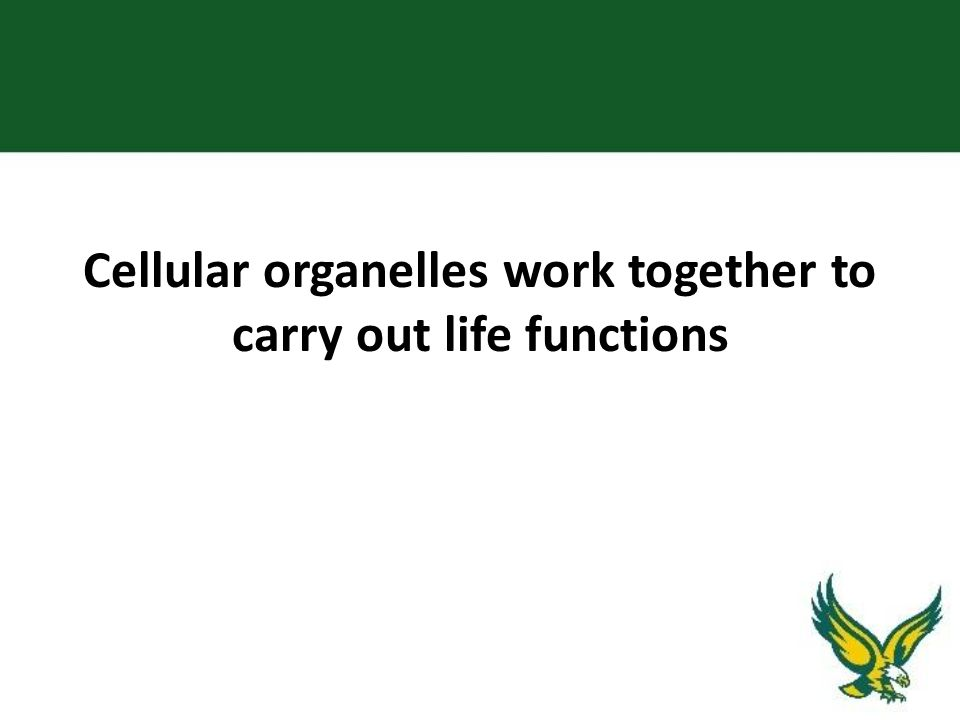 Cellular organelles work together to carry out life functions