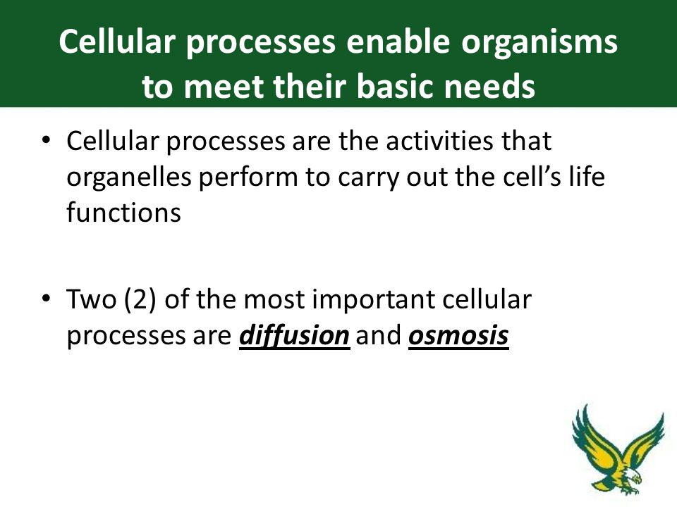 Cellular processes are the activities that organelles perform to carry out the cell's life functions Two (2) of the most important cellular processes are diffusion and osmosis