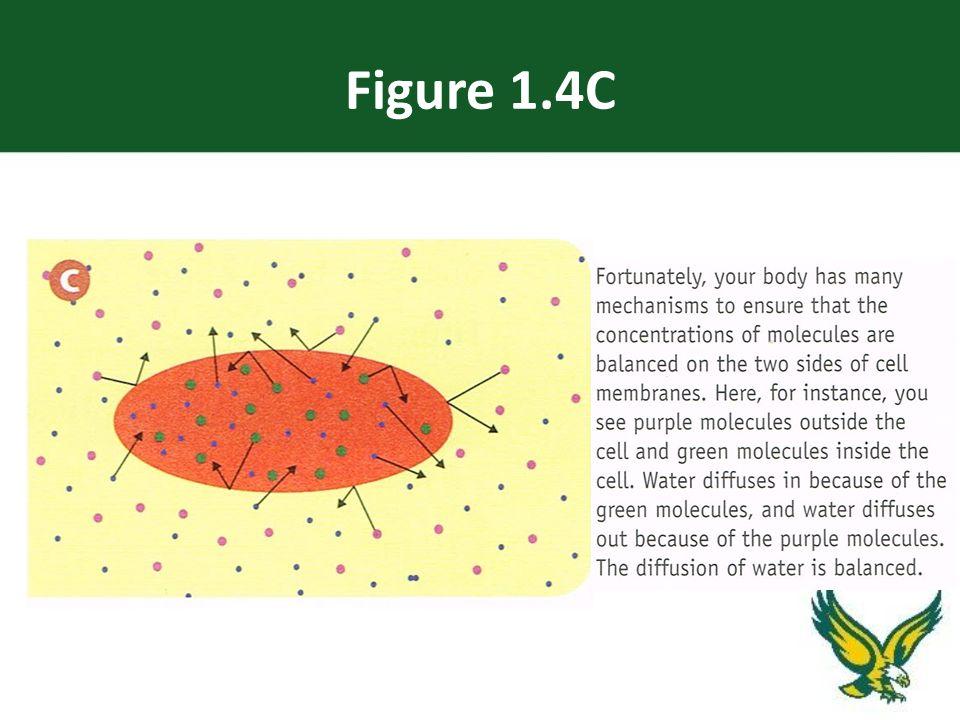 Figure 1.4C
