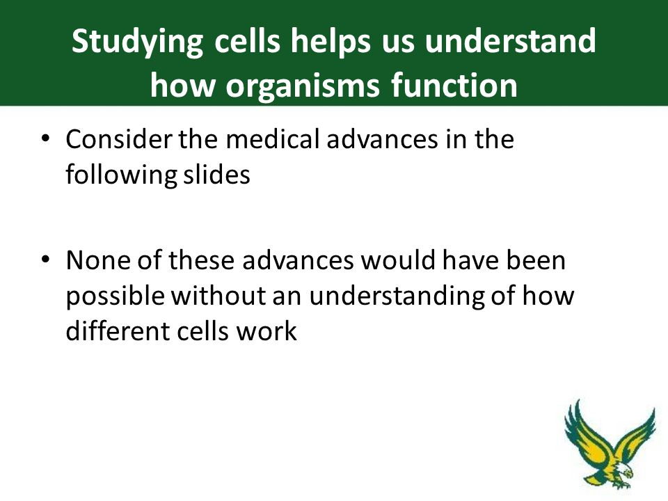 Studying cells helps us understand how organisms function Consider the medical advances in the following slides None of these advances would have been possible without an understanding of how different cells work