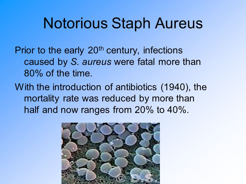 Notorious Staph Aureus Prior to the early 20 th century, infections caused by S.