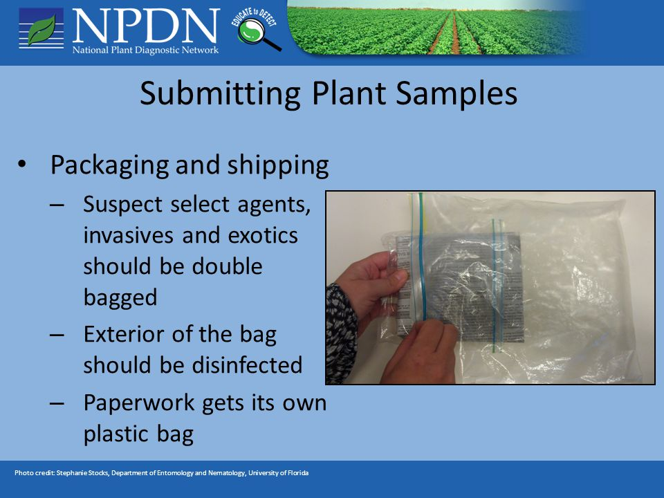 Photo credit: Stephanie Stocks, Department of Entomology and Nematology, University of Florida Submitting Plant Samples Packaging and shipping – Suspect select agents, invasives and exotics should be double bagged – Exterior of the bag should be disinfected – Paperwork gets its own plastic bag