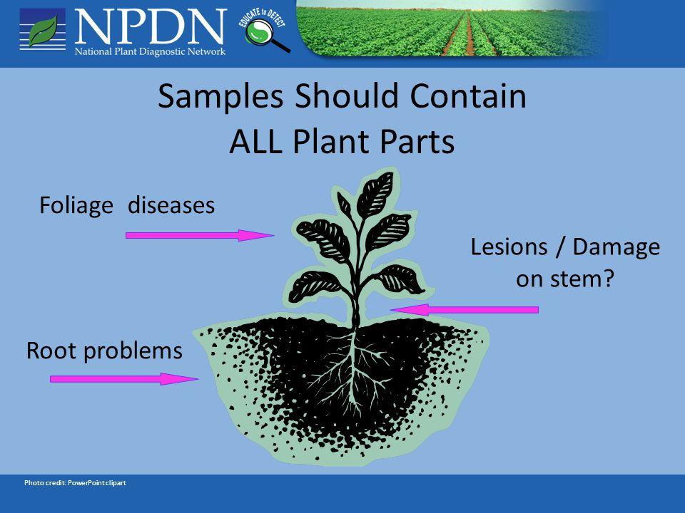Reviewers Richard Hoenisch M.S., WPDN, Department of Plant Pathology, University of California, Davis Rachel L.